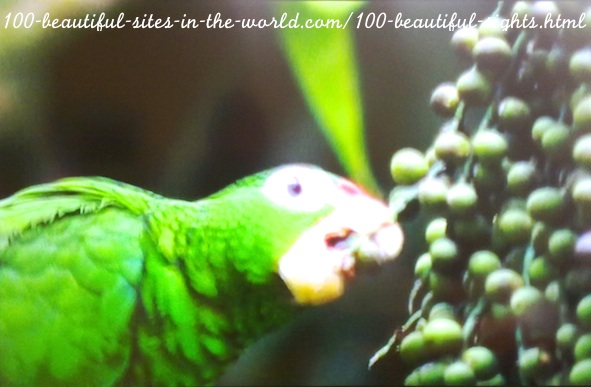 100 Beautiful Sights in the World: 100 Beautiful Birds.