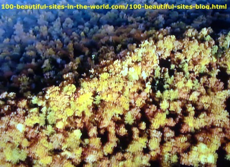 Cape Floral Region: Underwater Species in 100 Beautiful Sceneries.
