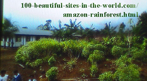 Amazonian Beautiful Images From the Amazon Rainforest