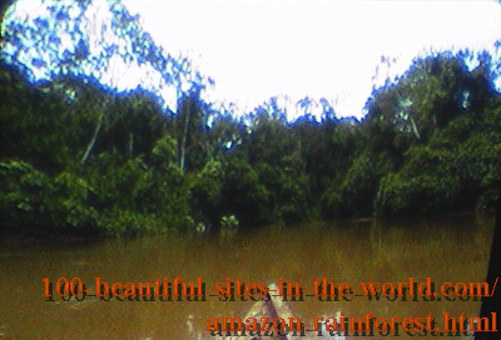 Beautiful Amazonian Pictures: The Amazonian Rainforest Full of Waters.