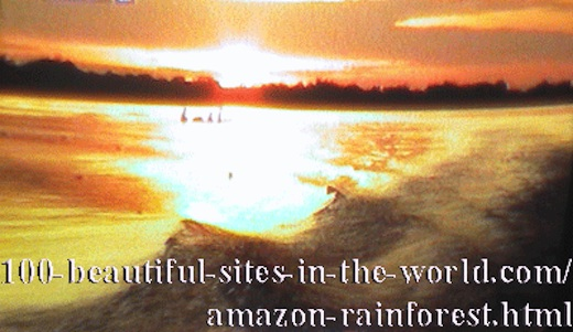 Beautiful Amazonian Scenes: Harmony of the Amazonian Nature Coloring the Horizon.