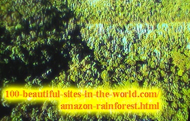 Beautiful Amazonian Scenes: In the Heart of the Amazon Rainforest.