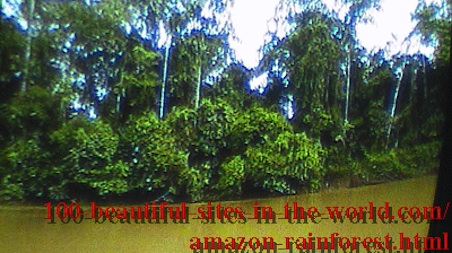 Beautiful Amazonian Tableaux: Pictures from the beautiful Amazonia.