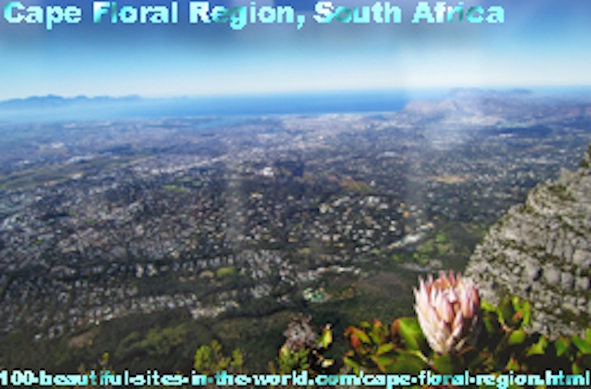 Cape Floral Region, the Floral Kingdom of Fine Bush in South Africa