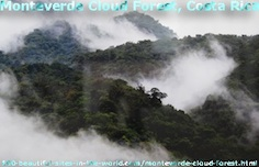 Monteverde Cloud Forest, Costa Rica Wonderful Land.
