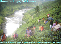 Nuwara Eliya, Nuwaraeliya District, Sri Lanka, Tea Producer, Ceylon Tea