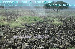 Serengeti Savannah, Masai Mara, Tanzania, Kenya