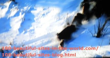 travel photography, snow animal hunting
