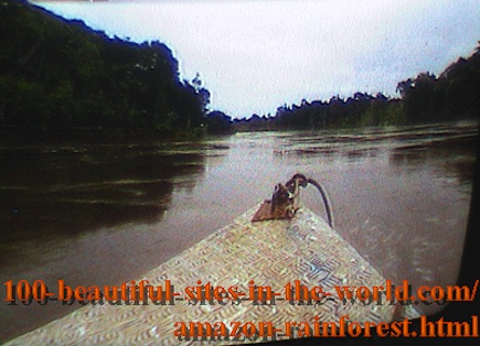 Beautiful Amazonian Pictures: Sailing in the Amazonian Rainforest at Evening.