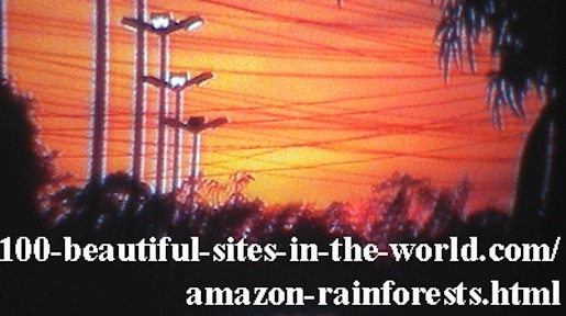 Beautiful Amazonian Tableaux: Lights of nature in Amazonia.
