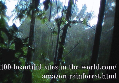 Beautiful Amazonian Tableaux: The legs of the Amazon.