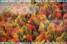 Boreal Forest in Charlevoix region, Quebec, Canada