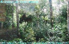 Borneo in Indonesia