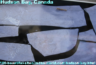 Hudson Bay, Canada, Polar Bears