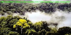 East Africa's Rainforest Before the New Crises of Nature.